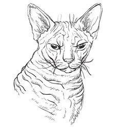 Hand drawing cat 3 vector