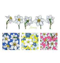 set of flowers narcissus with three different vector image