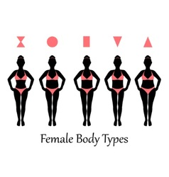 female body types vector image