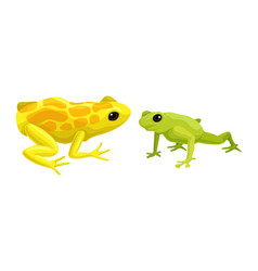Frog as short-bodied and tailless amphibians vector