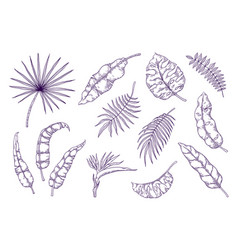 hand draw palm leaves tropical foliage sketch vector image