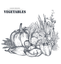 hand drawn farm vector image