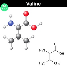 Valine proteinogenic amino acid vector image