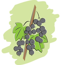bunch of black currant vector image