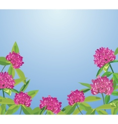 Background with clover flowers vector