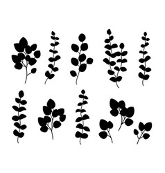 black branch with herb and plant leaves vector image