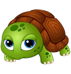 cute baby turtle cartoon vector image