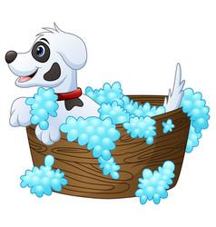 cute little dog taking a bath on a white backgroun vector image