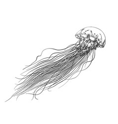 hand drawn sketch jellyfish in black isolated vector image