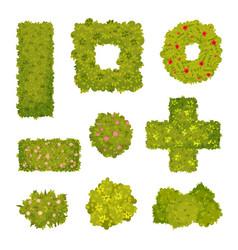 Set images ornamental bushes vector