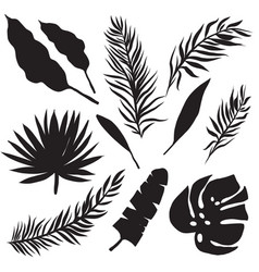 Set of palm leaves silhouettes vector