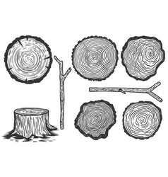 set wood slice in engraving style design vector image