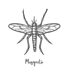 sketch malaria mosquito or insect sketching vector image