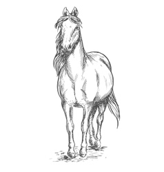 Walking white horse sketch portrait vector