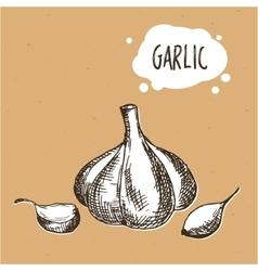 Garlic in engraving vintage style Hand drawn vector image