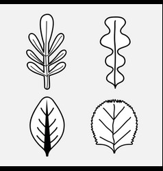 Beautiful and natural leaves of plants vector