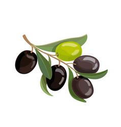 olives bunch logo green and black olives branche vector image