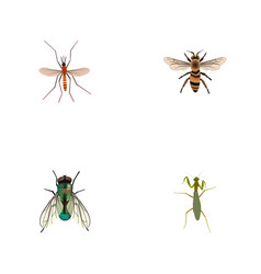 Realistic wasp housefly grasshopper and other vector