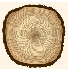 tree rings cut stump vector image