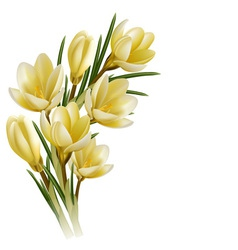 Crocus flowers vector image vector image