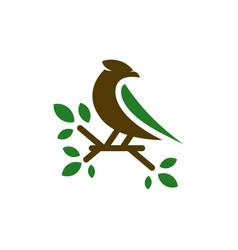 Canary animal logo design vector