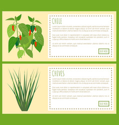 chile and chives herbal plants spicy flavor food vector image