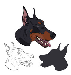 Doberman face isolated on white background vector