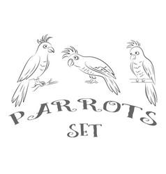 parrots contours vector image