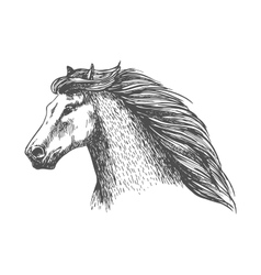 Raging gray horse free running portrait vector image