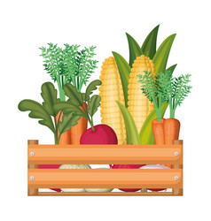colorful silhouette of wooden box with vegetables vector image vector image