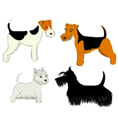 dogs breeds vector image