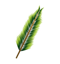 green pine branch leaves natural foliage vector image
