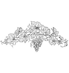 Hand drawn grape branch with berries vector