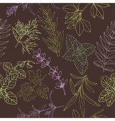 Herbs seamless pattern on a dark background vector