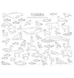 Tundra biome simple line style terrestrial vector