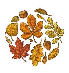 Set leaf and acorn vintage colorful vector image