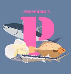 Phosphorus healthy nutrient rich food vector