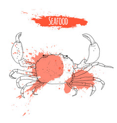 seafood hand drawn sketch of crab vector image