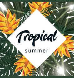 tropical poster with tropical leaves and flowers vector image