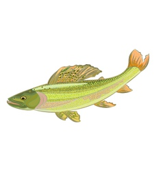 Grayling vector