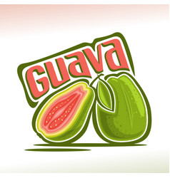 Guava fruit vector