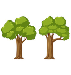 two big trees on white background vector image