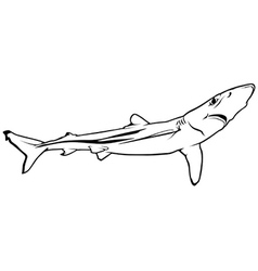 Blue Shark vector image vector image