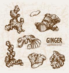 digital detailed line art ginger vector image