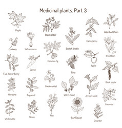 Vintage collection hand drawn medical herbs and vector