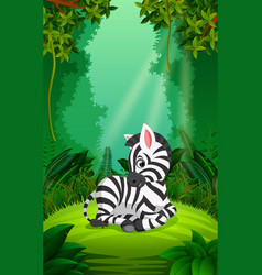 Zebra in the clear and green forest vector