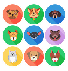 set of pedigreed dogs on colored circle icons vector image