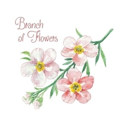 Branch of apple blossom vector