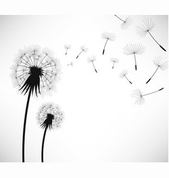 dandelion wind blow flower 2 dandelion being vector image