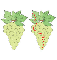 Easy grapes maze vector